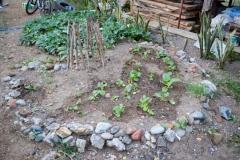 Bio-intensive Garden Plot